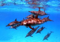 Lichtspiegelungen von Gesellschaft zur Rettung der Delphine e.V.
